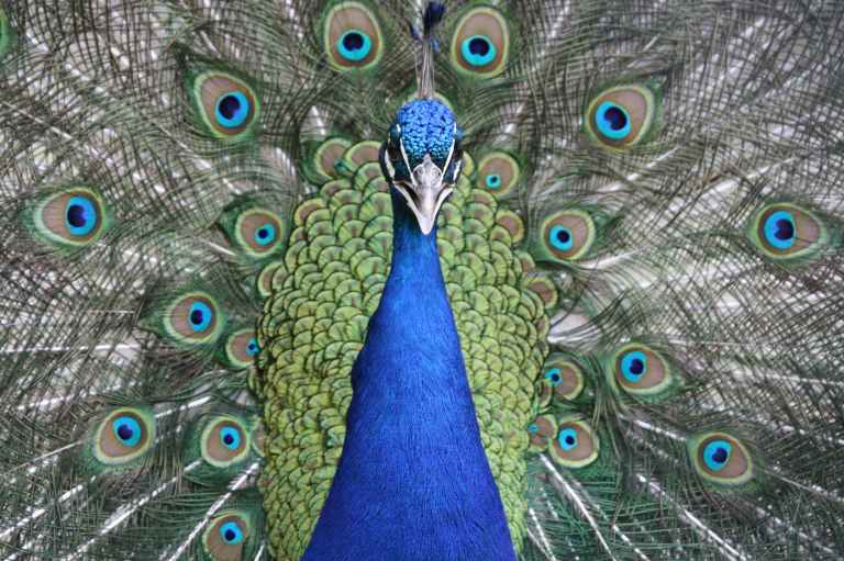 animal animal photography beautiful bird